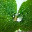 Innovación en envase sostenible y plásticos agrícolas
