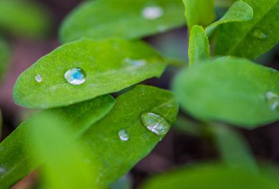 Material ultrahidrofóbico: de la naturaleza a la industria