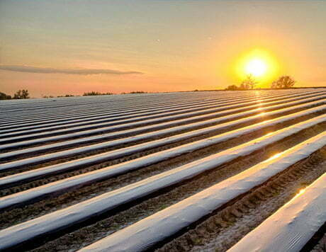 Plásticos agricultura